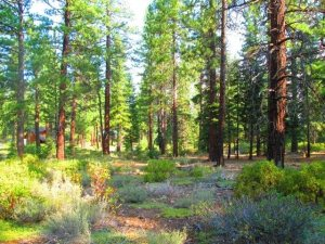 2.44 acres on Royal Crest