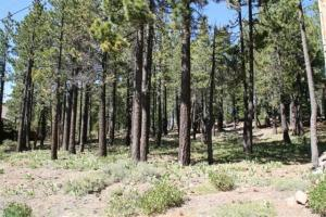 Tahoe Donner Residential Lot for Sale