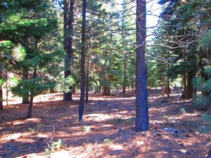 Northwoods lot at Tahoe Donner