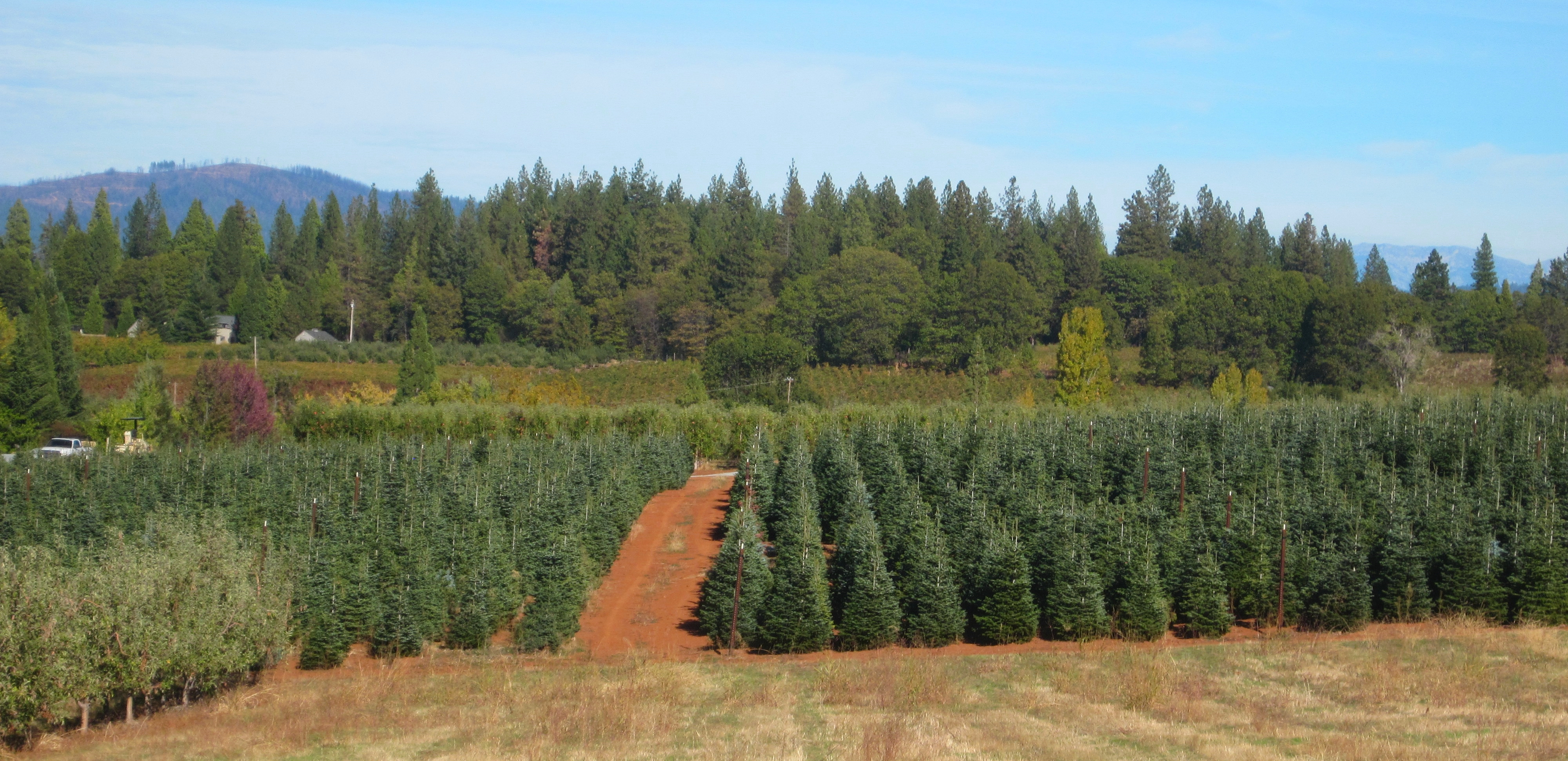Choose And Cut Christmas Trees Nc