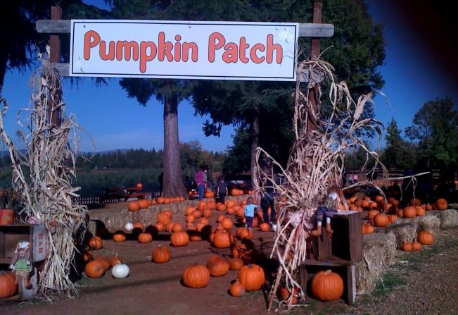 apple-hill-pumpkin-patch