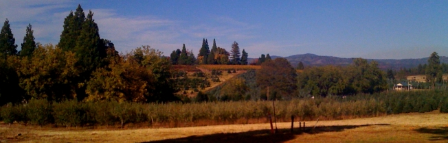 wineries-apple-hill